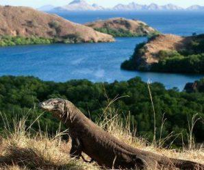 Pulau Komodo Labuan Bajo