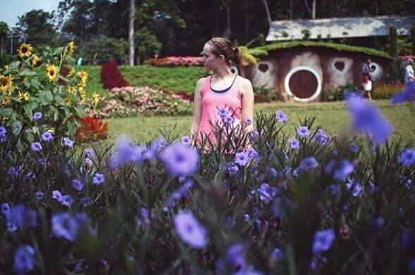 bule kebun bunga celosia
