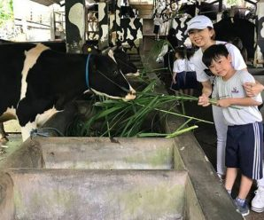 kampung susu tulungagung