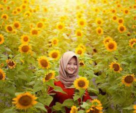 taman bunga matahari magelang
