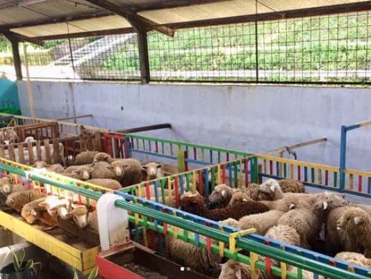 domba wonoland