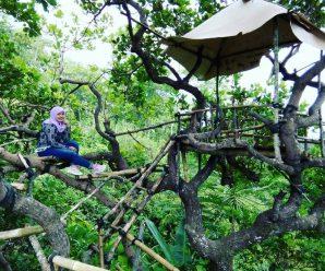 Spot rumah pohongoa Cocor