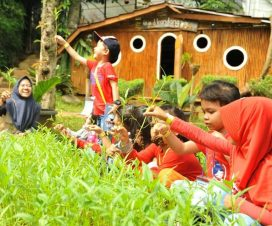D Kandang Amazing Farm Depok