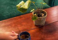 Kafe jinjit medan